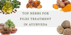 Top-Herbs-for-Piles-Treatment-in-Ayurveda
